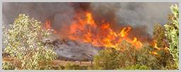 Wildfire Loss Attorney